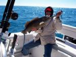 A Cedar Key cold weather grouper