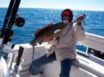 A Cedar Key cold weather grouper
