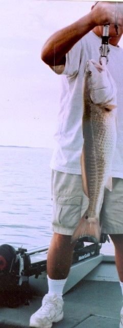 A very nice Yankeetown Redfish