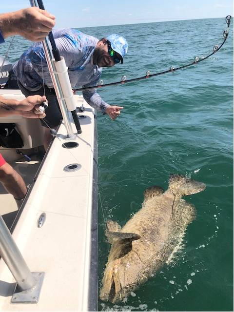 Worth The Work, Andy's 100 plus lb Goliath Grouper, What A Battle!