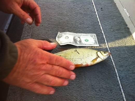Big Bait Big Fish