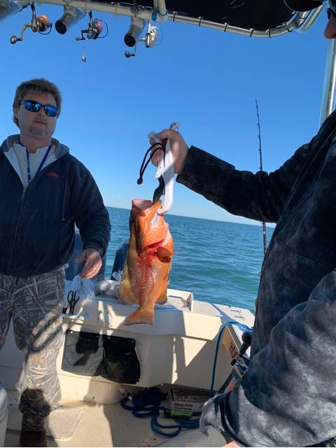 Captain John looking at John Mathis's 1st Red Grouper