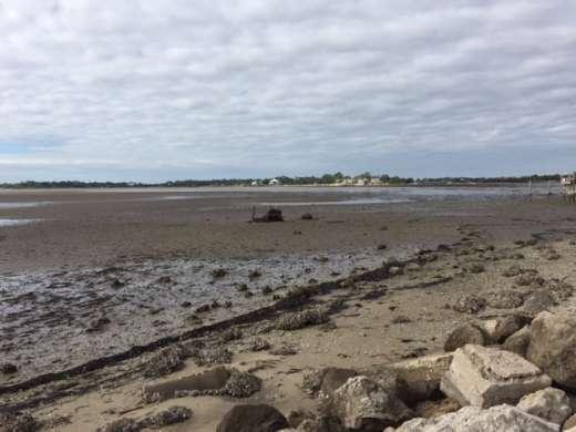 Cedar Key Low Tide