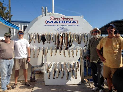 A Day's Catch Out From Steinhatchee, Florida