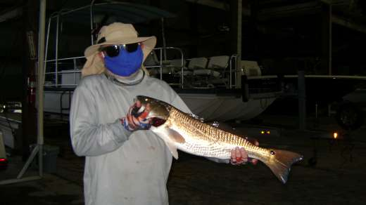 Social distancing with a huge Redfish