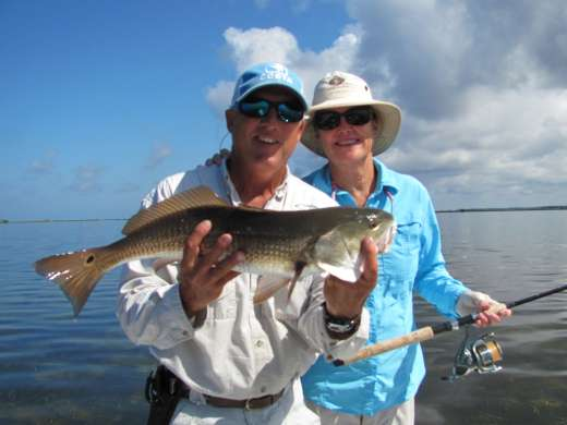 Cobia saltwater fishing reports for Steinhatchee fl fishing