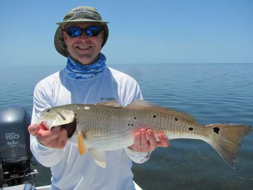 Lots Of Spots, A June Steinhatchee Redfish