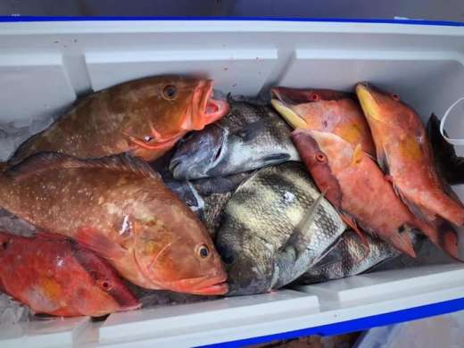 Nice Cedar Key, Florida cooler of fish for the family