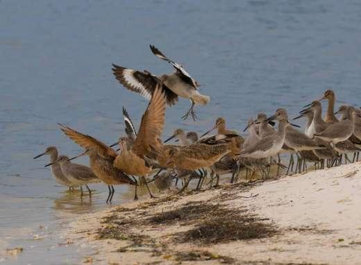 Bird Mix In Cedar Key