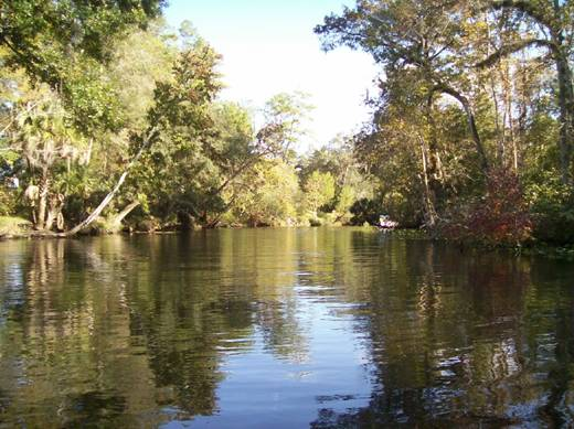 And another Ocklawaha River Picture