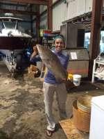 A 14.5 lbs Cedar Key Gag Grouper