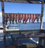 Cedar Key Red Grouper day with Captain John of Hookedup Charters