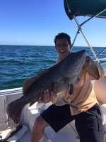 Mr. Henry Rabell Nice Grouper