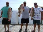 Three Nice Cedar Key Grouper