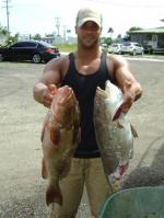 One and Half Gulf Coast Grouper