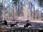 Old Wood Outfitters Trail Camera Picture