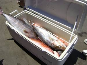 A cooler to clean, Amber Jack, Grouper and some Snapper
