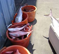 and some baskets of fish from the trip